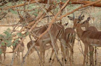 Путешествие Сенегал - Дакар