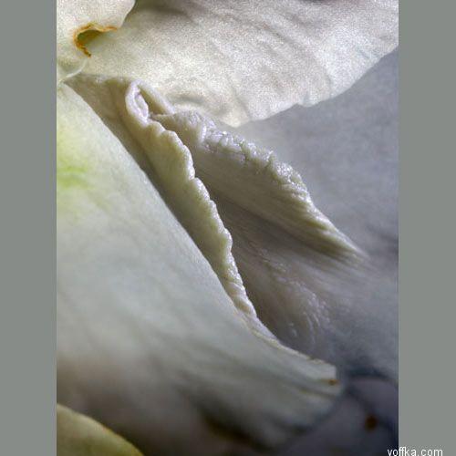 formi-vlagalishya-foto