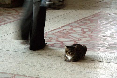 кошка и две ноги