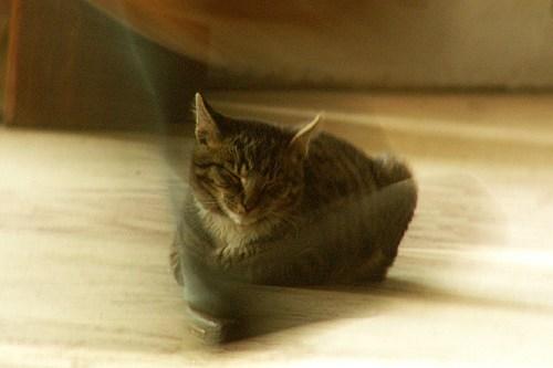 кошка и нога