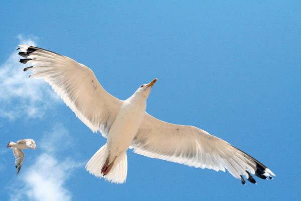 Чайка и небо