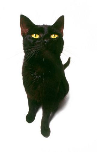 cat pee problems causes