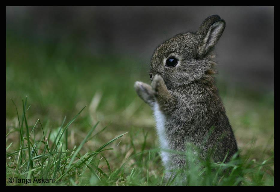 Nuôi thỏ! Bạn nghĩ sao? Rabbit