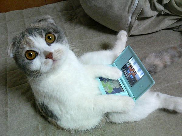 070124_cat.jpg