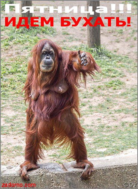 Смешная обезьянка открытки