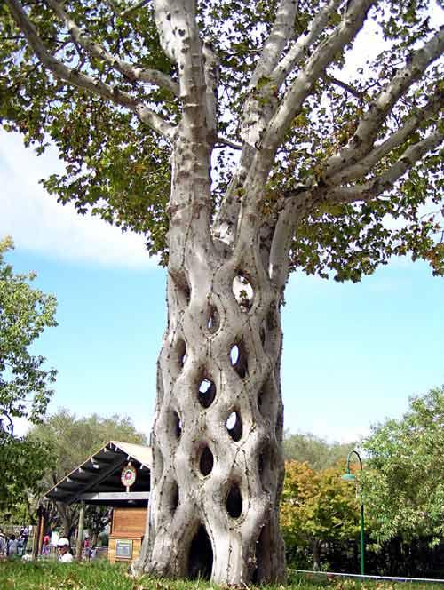 Необычные места, дома и деревья на Земле 1.8circustree