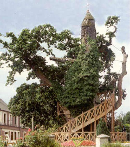 Необычные места, дома и деревья на Земле 10-most-magnificent-trees-in-the-world-chapel-oak-of-allouville-bellefosse-5