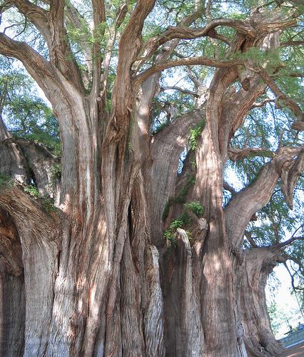 Необычные места, дома и деревья на Земле 165429905_3d0a76bda6