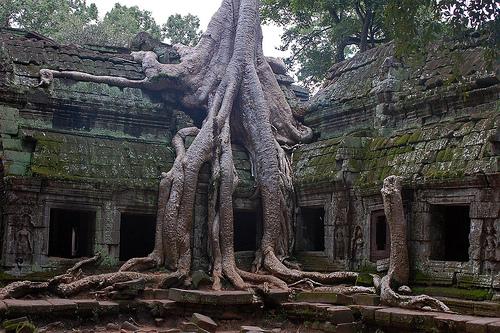 Необычные места, дома и деревья на Земле 2034725546_971bc471f3