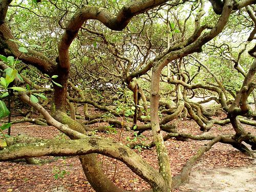 Необычные места, дома и деревья на Земле 2929868925_794e360e99