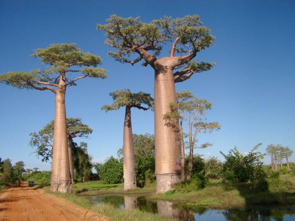 Необычные места, дома и деревья на Земле 43