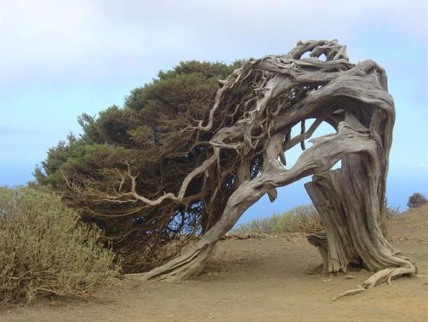 Необычные места, дома и деревья на Земле Bizarre-tree-