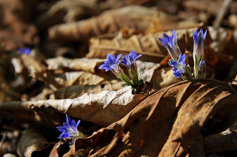 цветы заповедника кедровая падь