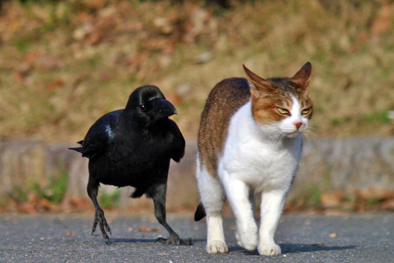 дружить не без;  тобой несложно равно клева
