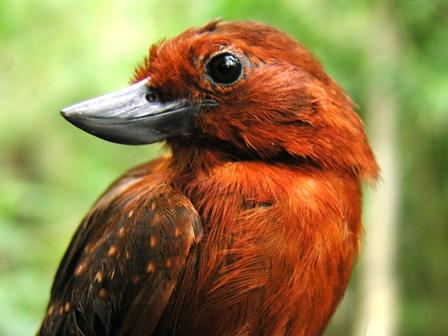 http://ljplus.ru/img4/i/n/inlakesh_trip/Bird.jpg