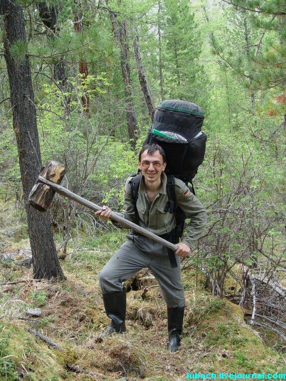 фото кедра в лесу