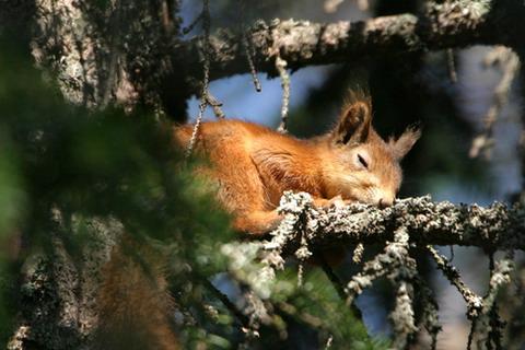 Какие животные обитают в смешанном лесу Животный мир