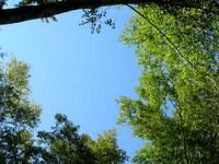 dlya-pokaza--Lesnoe-nebo.jpg