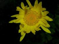 dlya-pokaza--cvetok1.jpg