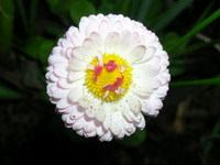 dlya-pokaza--cvetok2.jpg