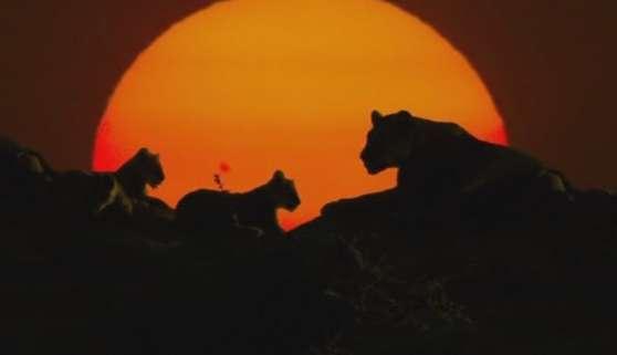 кадр из фильма львиная семейка