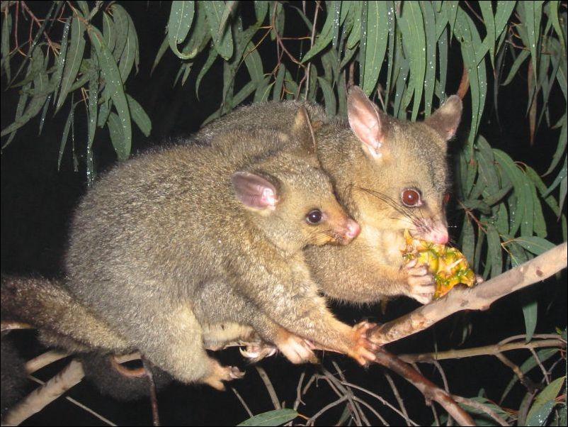 Животные Австралии.