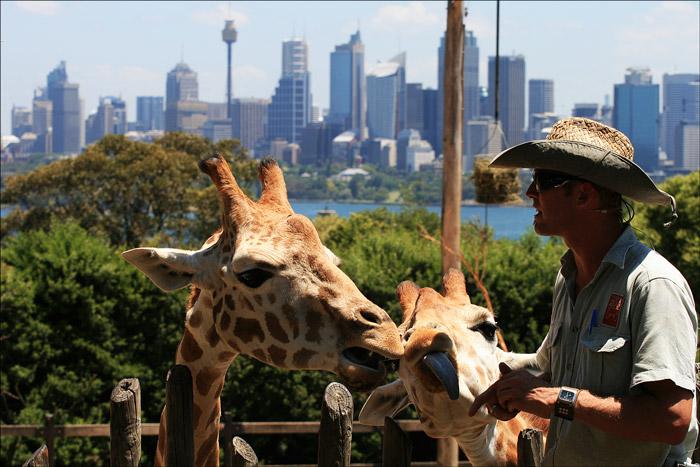 Australia Zoo  Employment