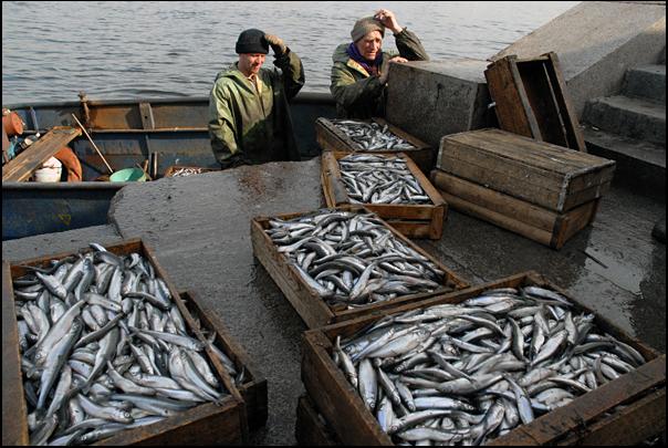 где купить корюшку в спб на набережной у рыбаков 2017