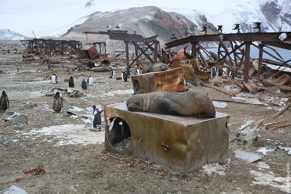 Фотки тюленей 9