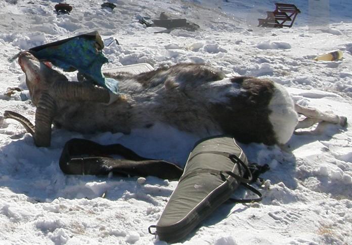 Животные в красной книге россии