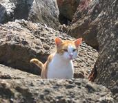 Критский кот приближается ко мне...