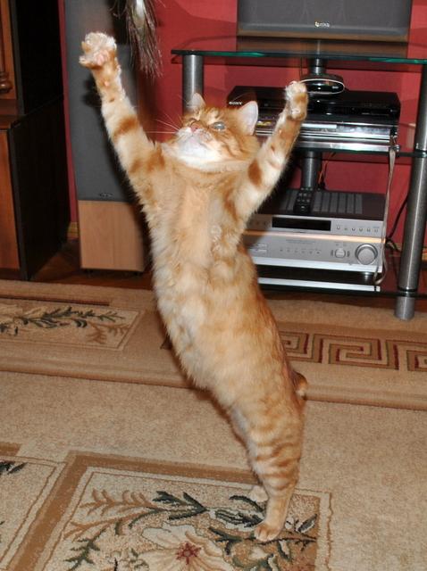 Картинка котик молодец