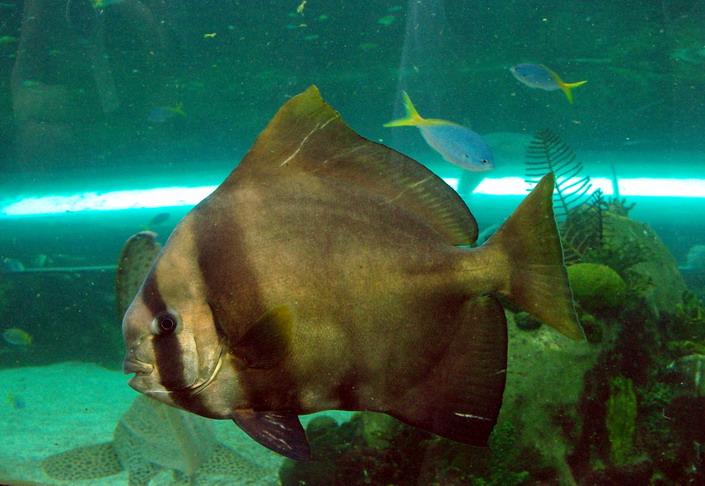 Сиднейский Аквариум рыбки