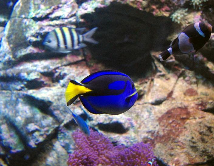 Сиднейський Акваріум рибки