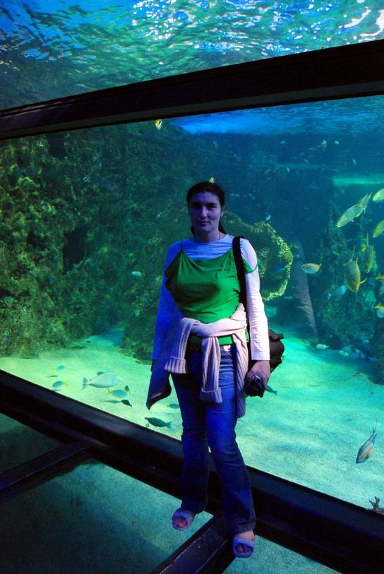 Сиднейский Аквариум акулы