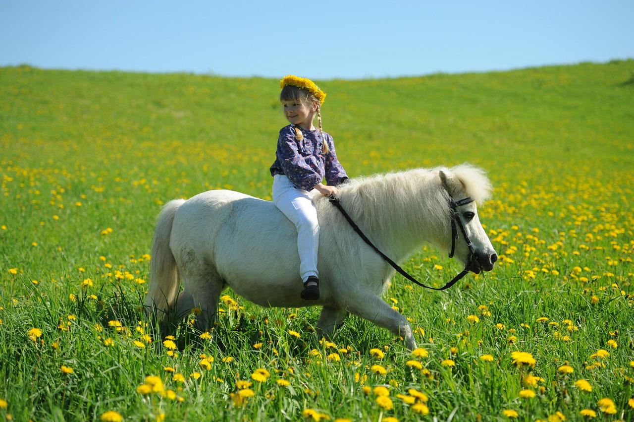 Пони для фотосессии москва