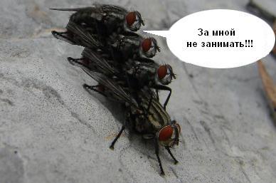 демотиватор мухи с одного куклы прокат