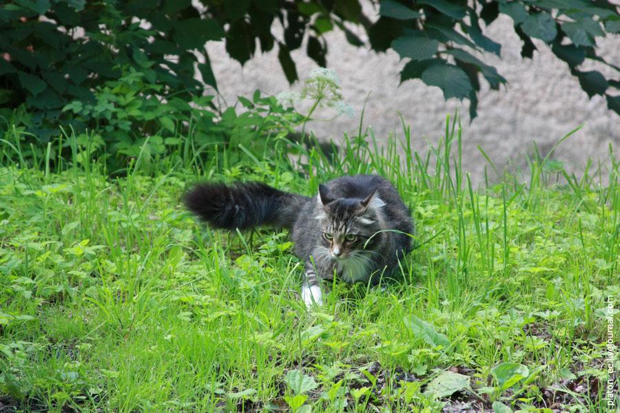 Котик охотится