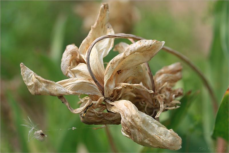 картинка умирающего растения же